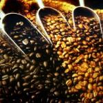 teuersten Kaffees der Welt